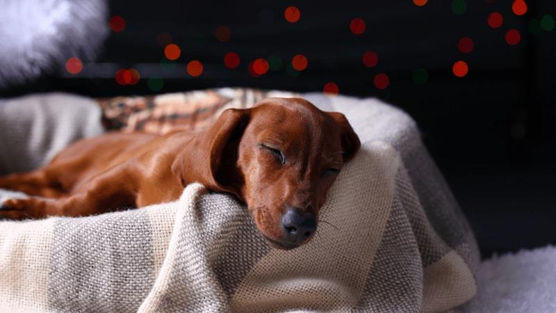 犬用ベッドおすすめ人気ランキング15選|洗えるタイプが便利!オシャレでかわいいドーム型も