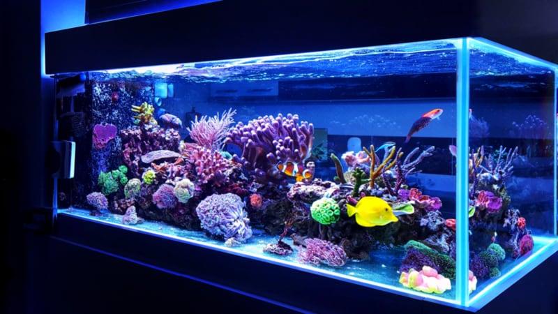 熱帯魚飼育セットおすすめ人気ランキング10選|初心者にオススメ!