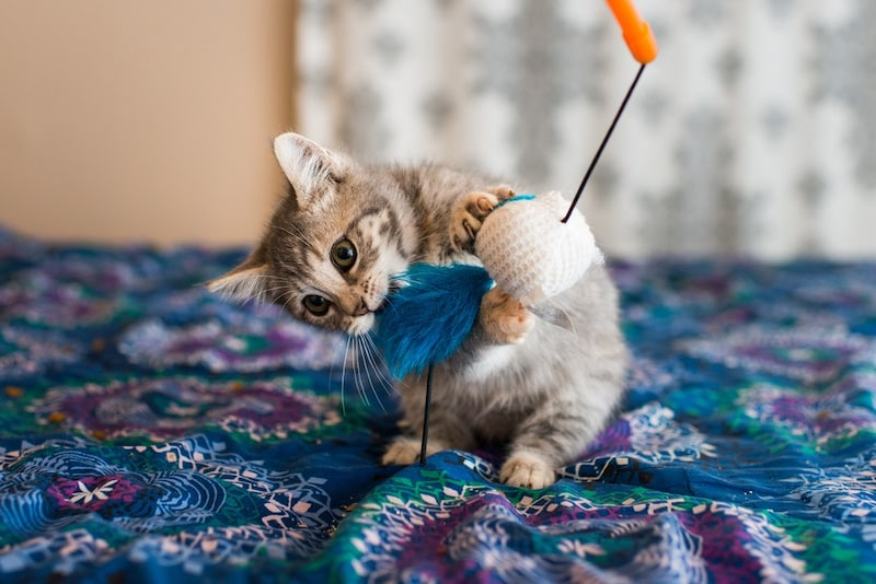 子猫用おもちゃのおすすめランキング21選 またたび入りや一人遊びできるものも!