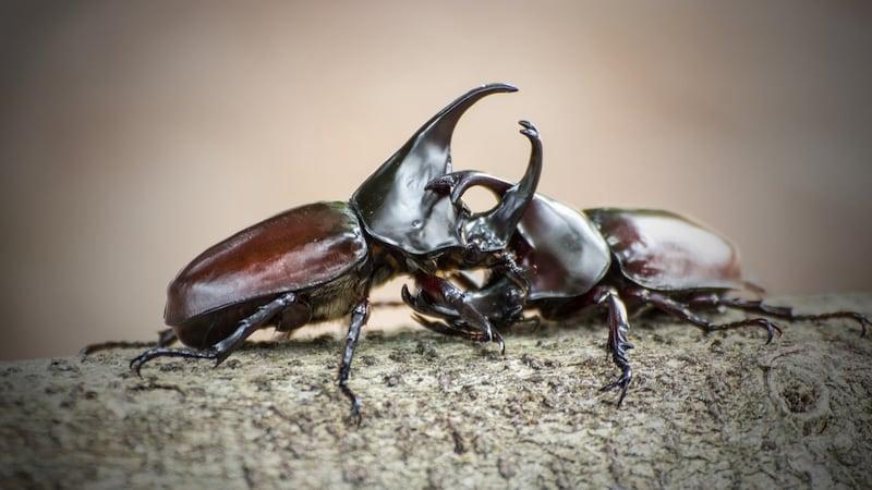 カブトムシ 餌おすすめ人気ランキング10選|食いつき抜群!