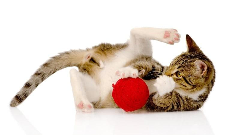 猫用けりぐるみのおすすめ人気ランキング10選|エビや魚が人気!かわいい子猫向けの商品も