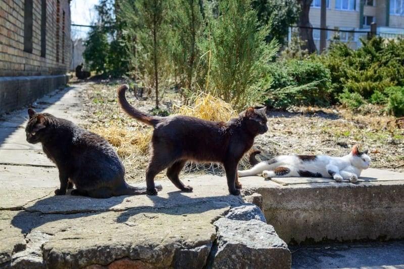 猫よけおすすめ人気ランキング8選|においや超音波で撃退!
