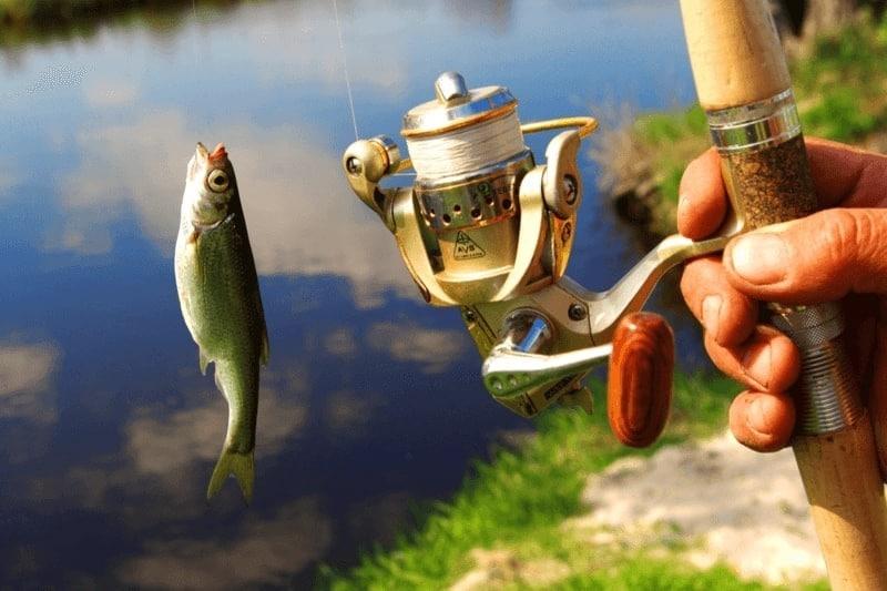 釣り餌のおすすめ人気ランキング7選|通販で購入できる釣り餌はこれ