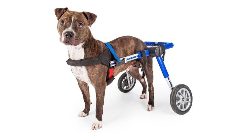 犬用車椅子のおすすめ10選|老犬、リハビリ中のワンちゃんに!2輪・4輪は症状で選んで