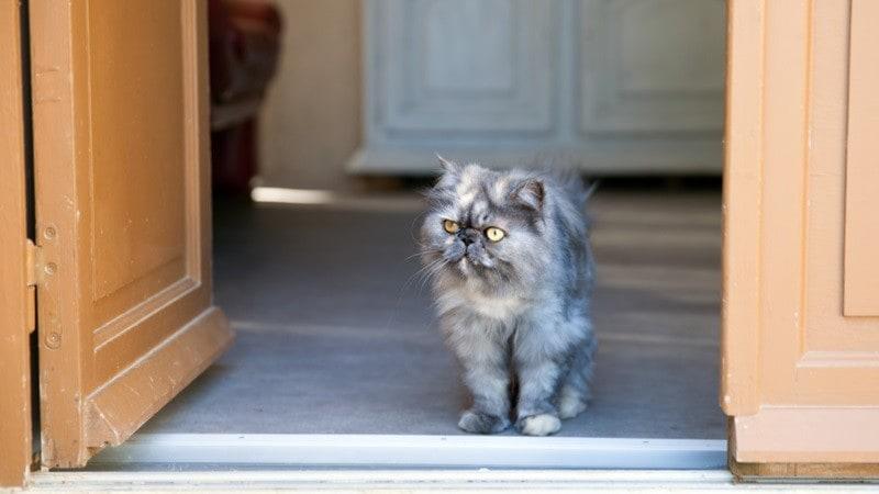 猫用フェンスおすすめ人気11選|玄関、ベランダや窓からの脱走防止に