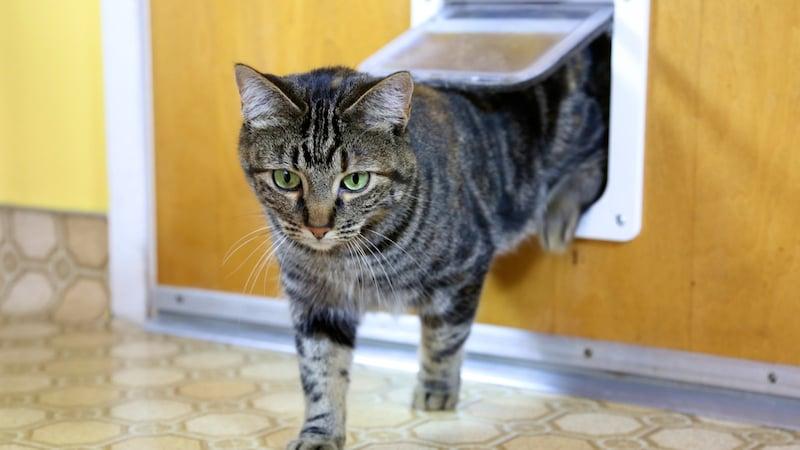 猫ドアおすすめ人気ランキング11選|工事不要で賃貸住宅に設置可能なもの、穴を開ける後付けタイプも