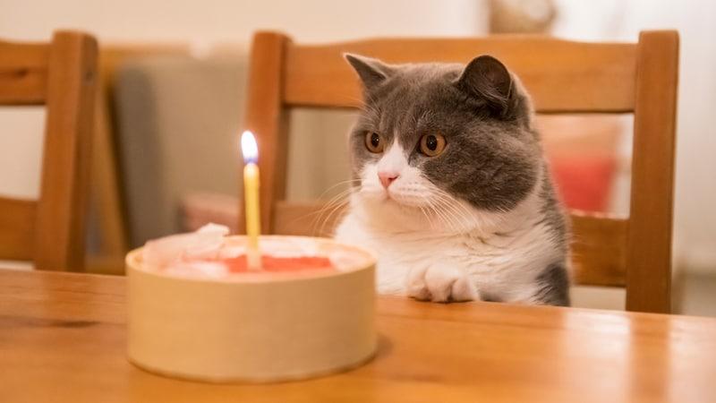 猫用ケーキおすすめ6選|お肉や魚を使用している商品が人気!人間用との違いも併せてチェック