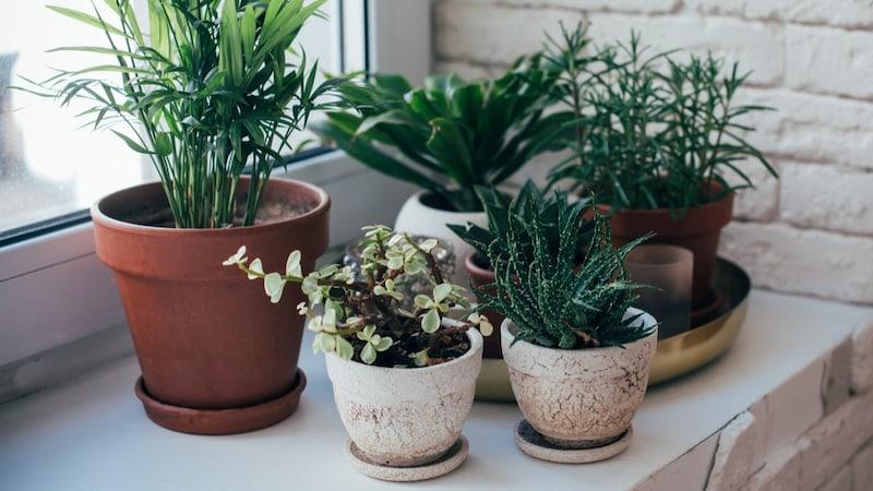 受け皿のおすすめ人気ランキング10選|室内栽培では必須です!