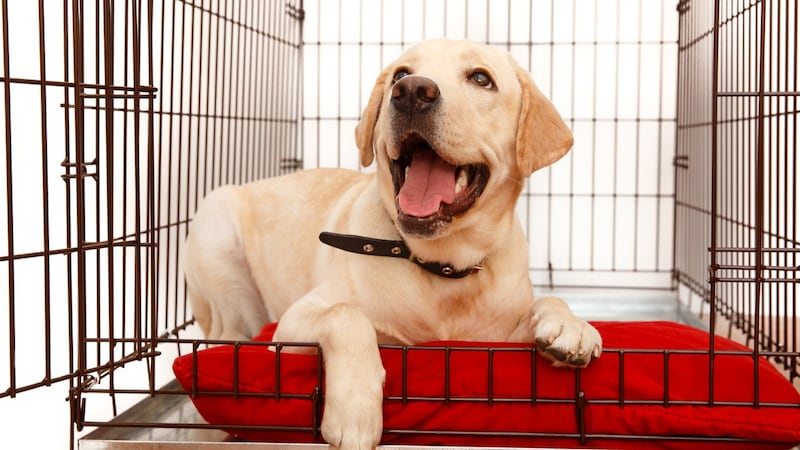 大型犬ケージおすすめランキング11選|室内でもOK!頑丈さに優れたものは?移動用も紹介