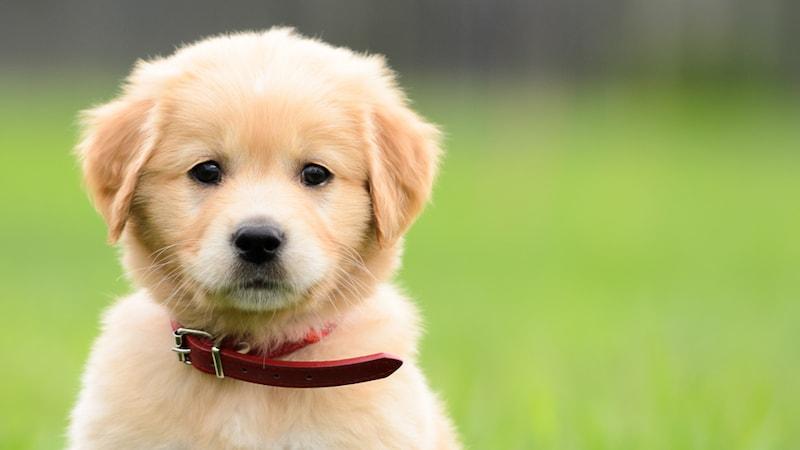 子犬の首輪おすすめ人気ランキング14選|リボン柄のかわいいものからおしゃれな商品まで紹介