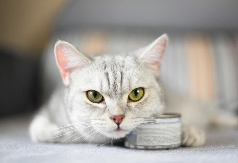 猫缶のおすすめランキング11選|高級缶詰からお得なまとめ買いまで一挙大公開!安全でおいしいものはどれ?