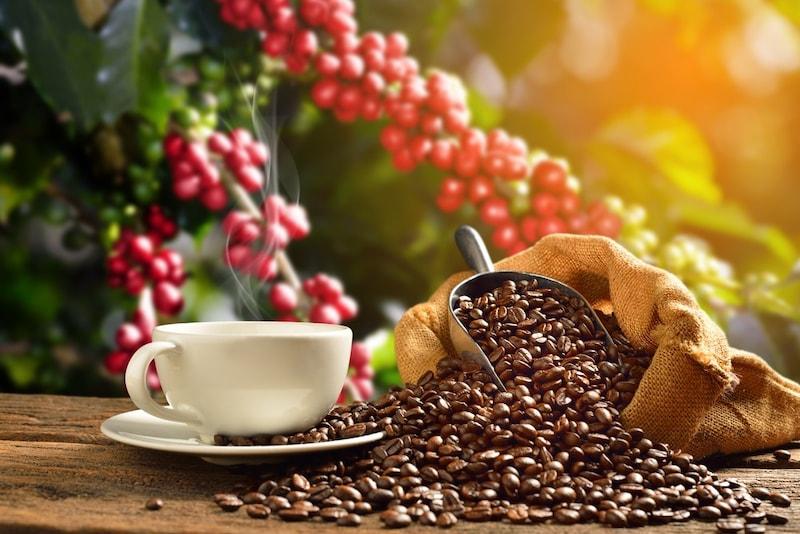 オーガニックコーヒーのおすすめ13選 豆や手軽なインスタント、ドリップタイプを紹介!ギフトにも人気