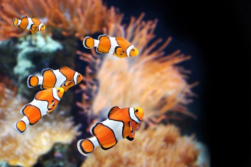 おすすめ熱帯魚用水槽10選|初心者の方にもおすすめな安くてオシャレな水槽も