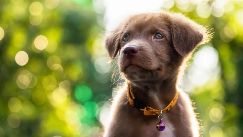 犬用首輪おすすめ人気ランキング14選|革製のおしゃれでかわいい商品から名前入れできるものも!