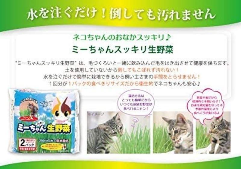 エムジーエムグリーン,猫草毛玉ケア 栽培済み2鉢セット,pet-grass-001