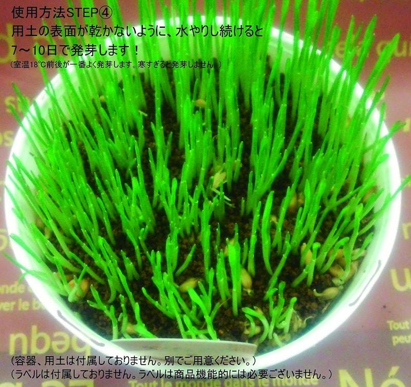 福花園種苗 ,ペットが食べる草のタネ 1L詰【獣医師おすすめ】