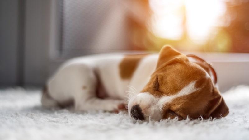 犬用ホットカーペットおすすめランキング16選|温かさをキープする冬の必需品!その他ペット用にも