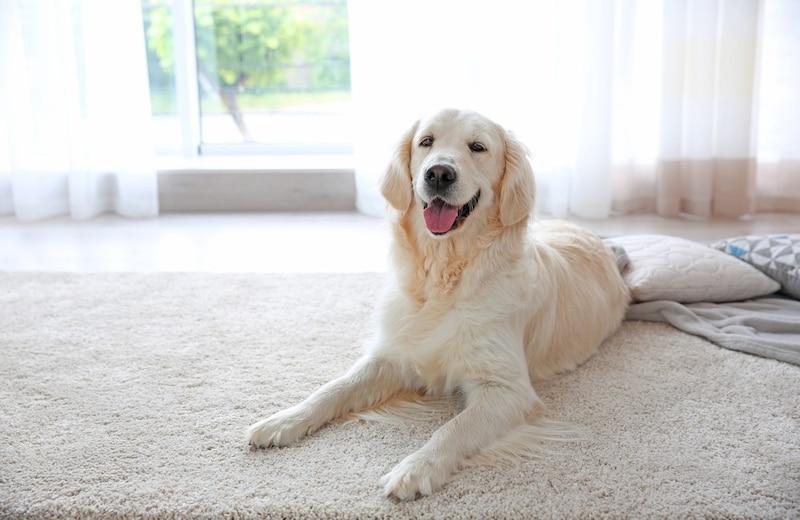 犬用滑り止めマットおすすめ10選|フローリングや廊下に!人気の半透明タイプも