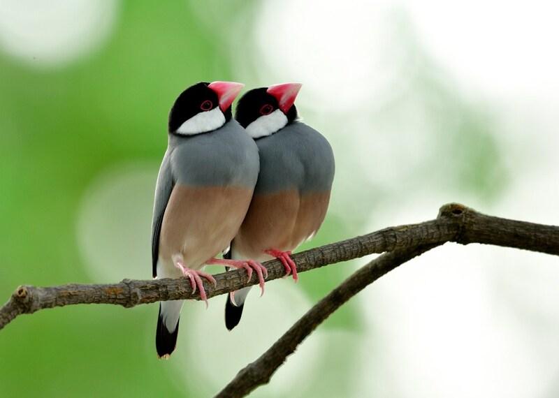 インコ・文鳥ケージおすすめ人気ランキング11選|愛鳥が快適に過ごせる大きさは?