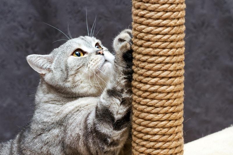 猫用爪とぎグッズおすすめ14選|人気素材はダンボールや麻!おしゃれでかわいい商品も