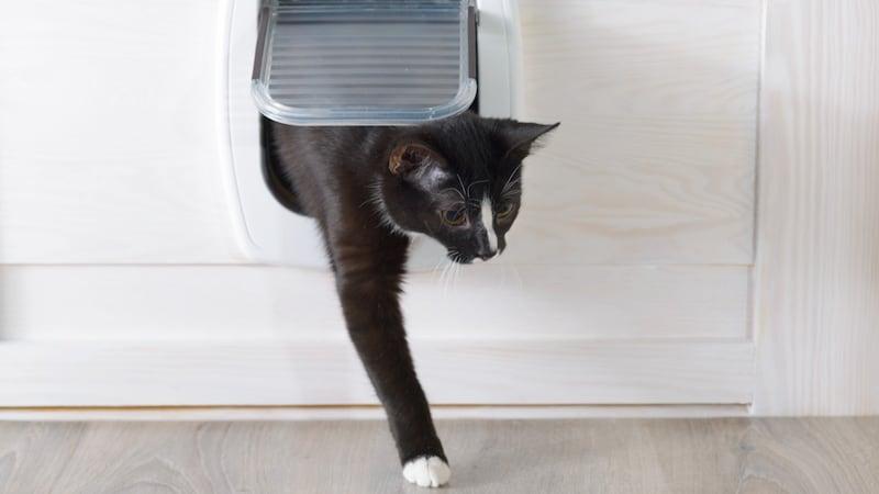 猫ドアおすすめ人気ランキング12選|工事不要で賃貸住宅に設置可能?穴を開ける後付けタイプのペットドアも紹介!