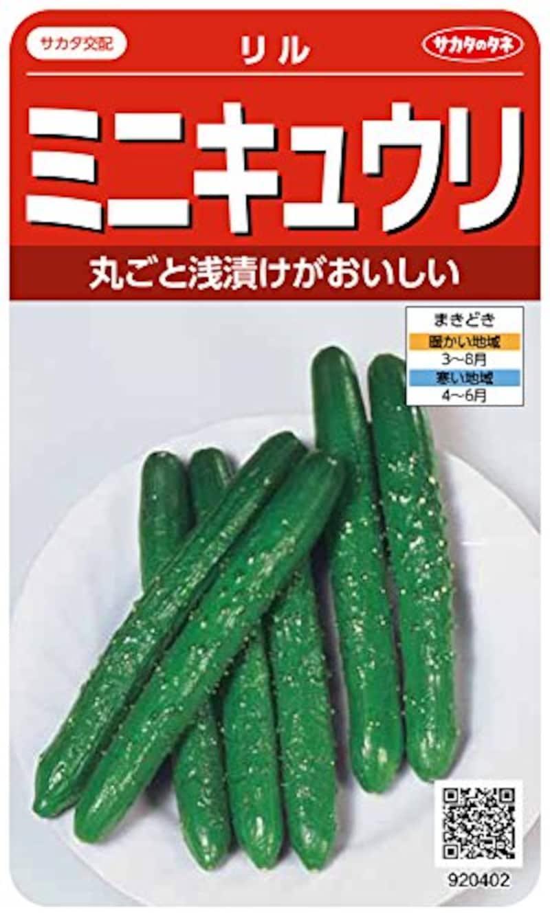 サカタのタネ,ミニキュウリ リル,00920402