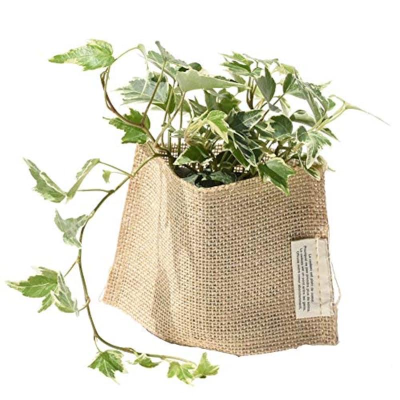 パキラと観葉植物専門店Marubun,スタンダード麻シリーズ【選べるミニグリーン】