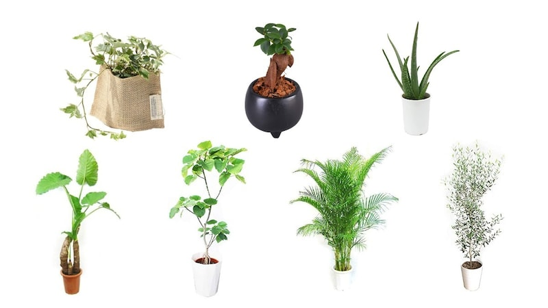 観葉植物おすすめ人気ランキング22選 初心者向けや大型に注目!インテリアに合うおしゃれな種類も