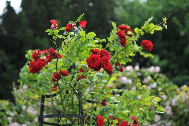 オベリスクのおすすめ人気ランキング9選|つるバラやクレマチスの誘引に!初心者でも仕立てやすい