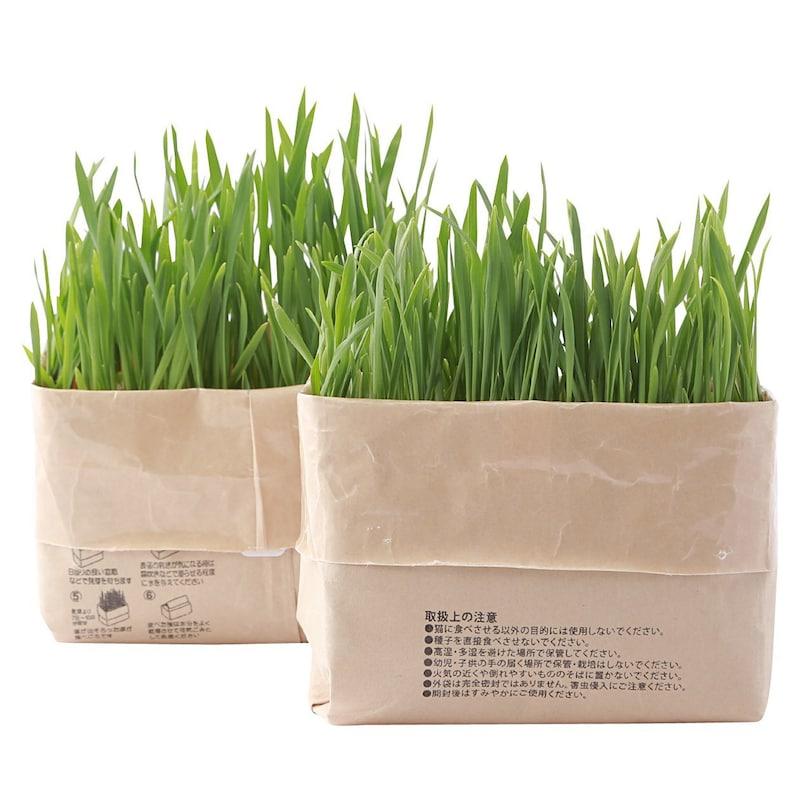 無印良品,猫草栽培セット 2個入り【獣医師おすすめ】