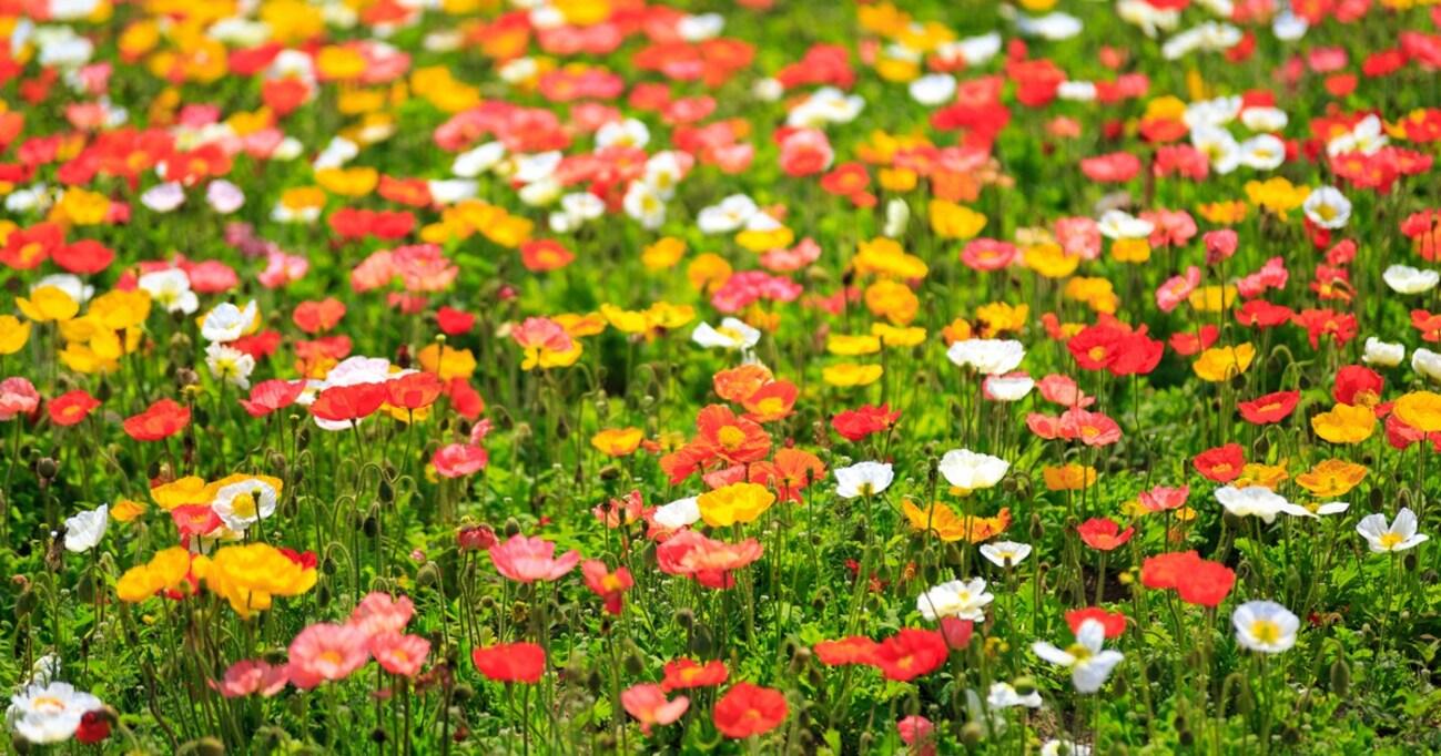 """【劇作家劇場】「腸のお花畑が実は小さな宇宙に…」そんな演劇も""""盲腸""""のように評価される日がくるのか?"""