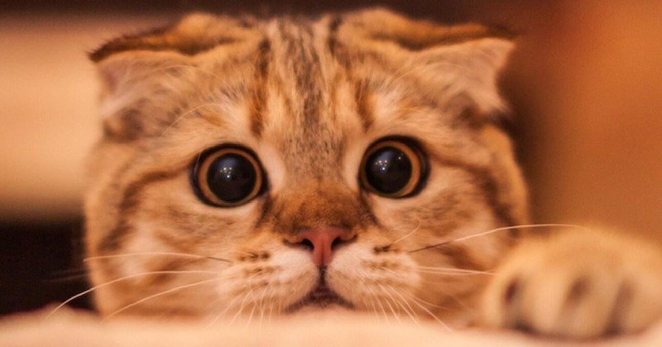 「ホントは、マタタビよりもゴハンよりも人間が好き」──猫より