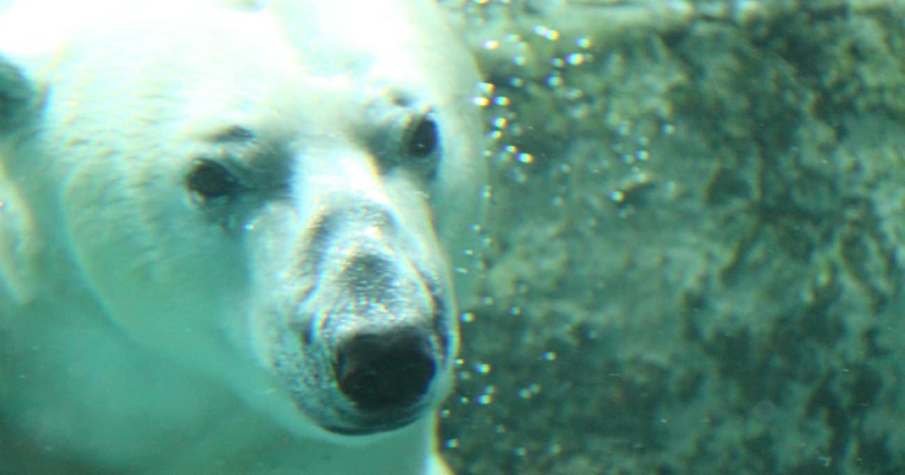【今週の大人センテンス】旭山動物園の坂東園長が語る動物の命に対する責任