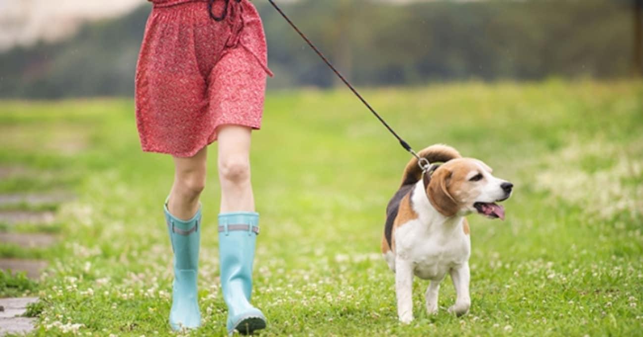 """「スマホ断ちできた」「規則正しい生活になった」「友達増えた」、さらには「恋人できた」という人も! """"犬を飼う""""ことで、人生は本当に変わるの?"""