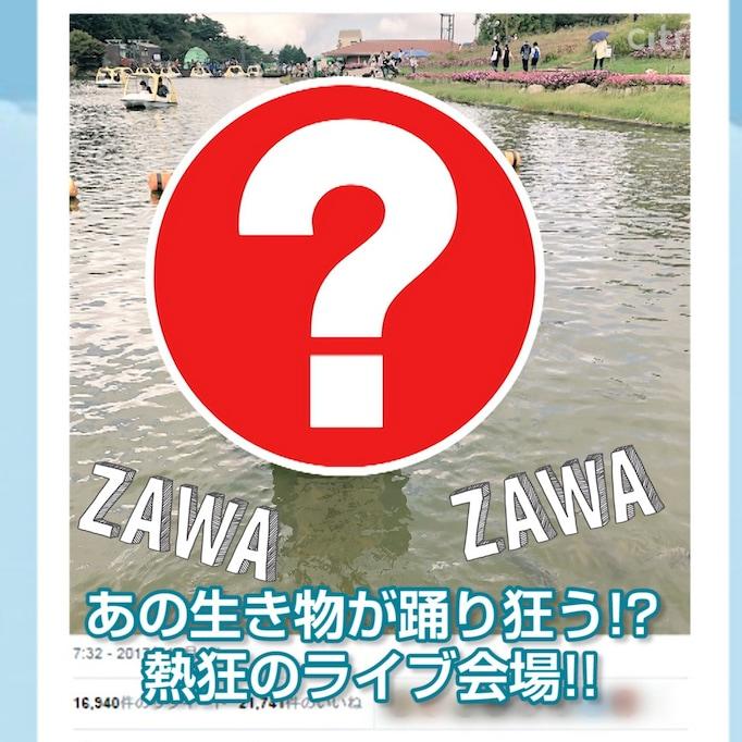 全公演大盛況! あの生き物たちを熱狂させる「ソロライブ」がSNSで話題──ZAWA-ZAWAしているあのスポットへ!
