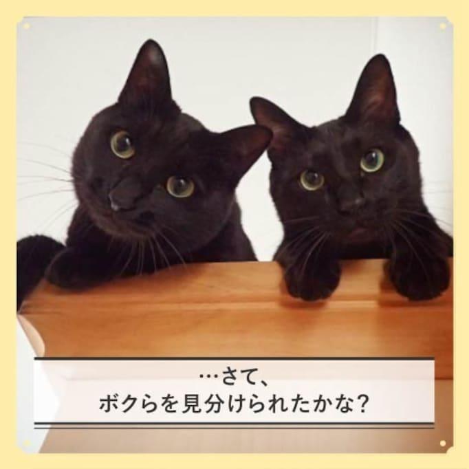 【チルスタ!!】見分けられるかな? いつも一緒の仲良しネコ兄弟