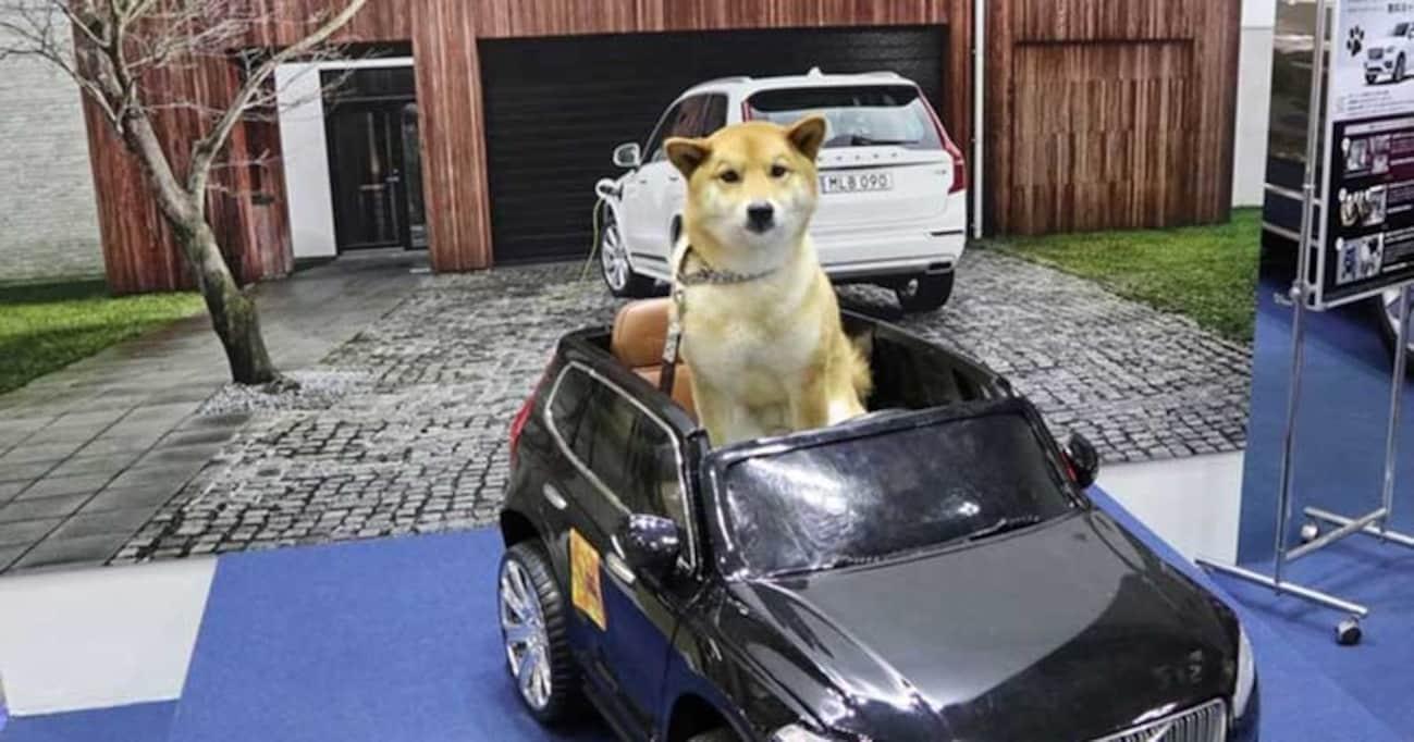 新車でも新車のにおいがしないボルボ、そのわけは…インターペット2018