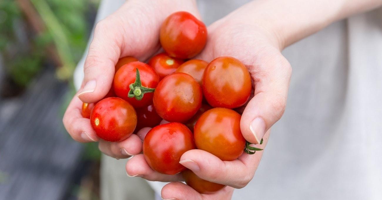 常温保存でリコピン60%増し!買ったときよりトマトの栄養を高めるコツ