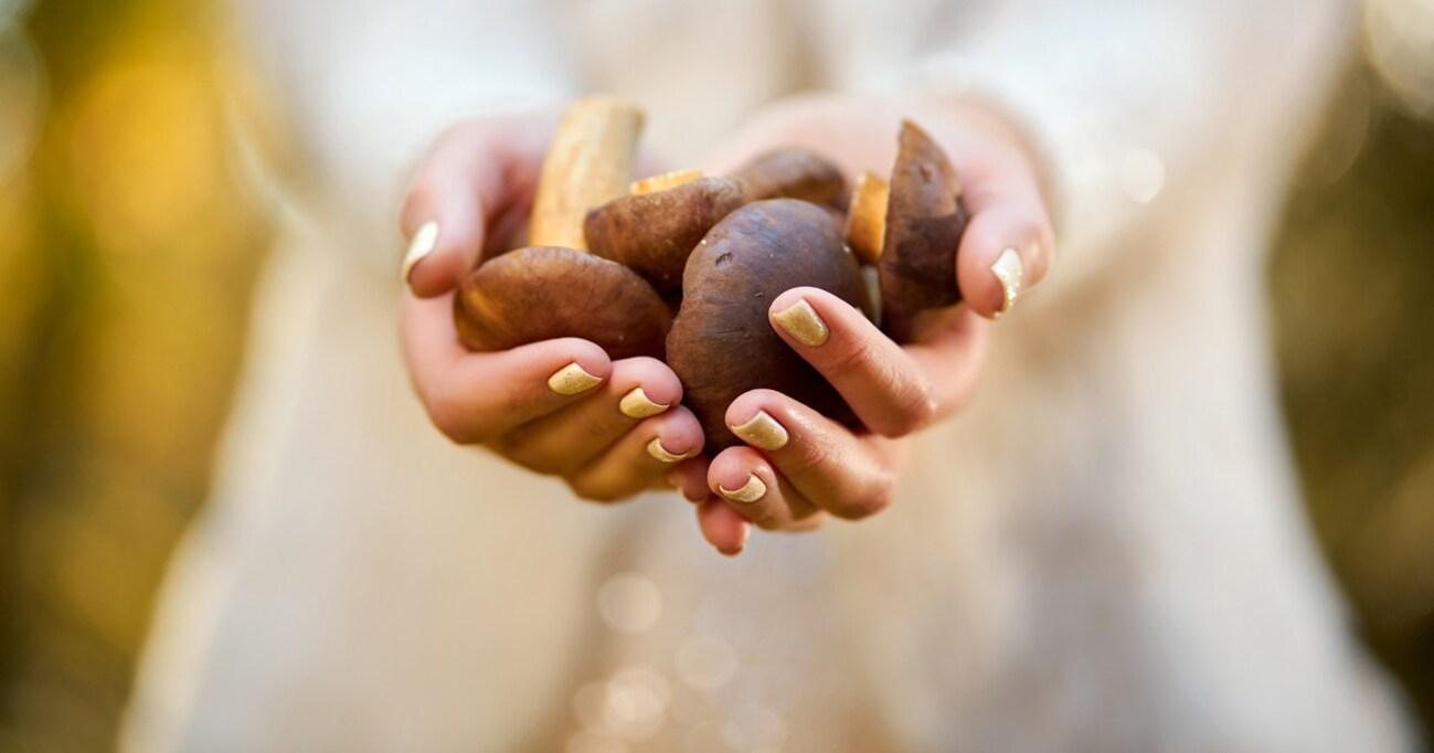 シイタケ皮膚炎⁉ エノキやエリンギも… 「キノコの生食」を甘くみてはいけない!