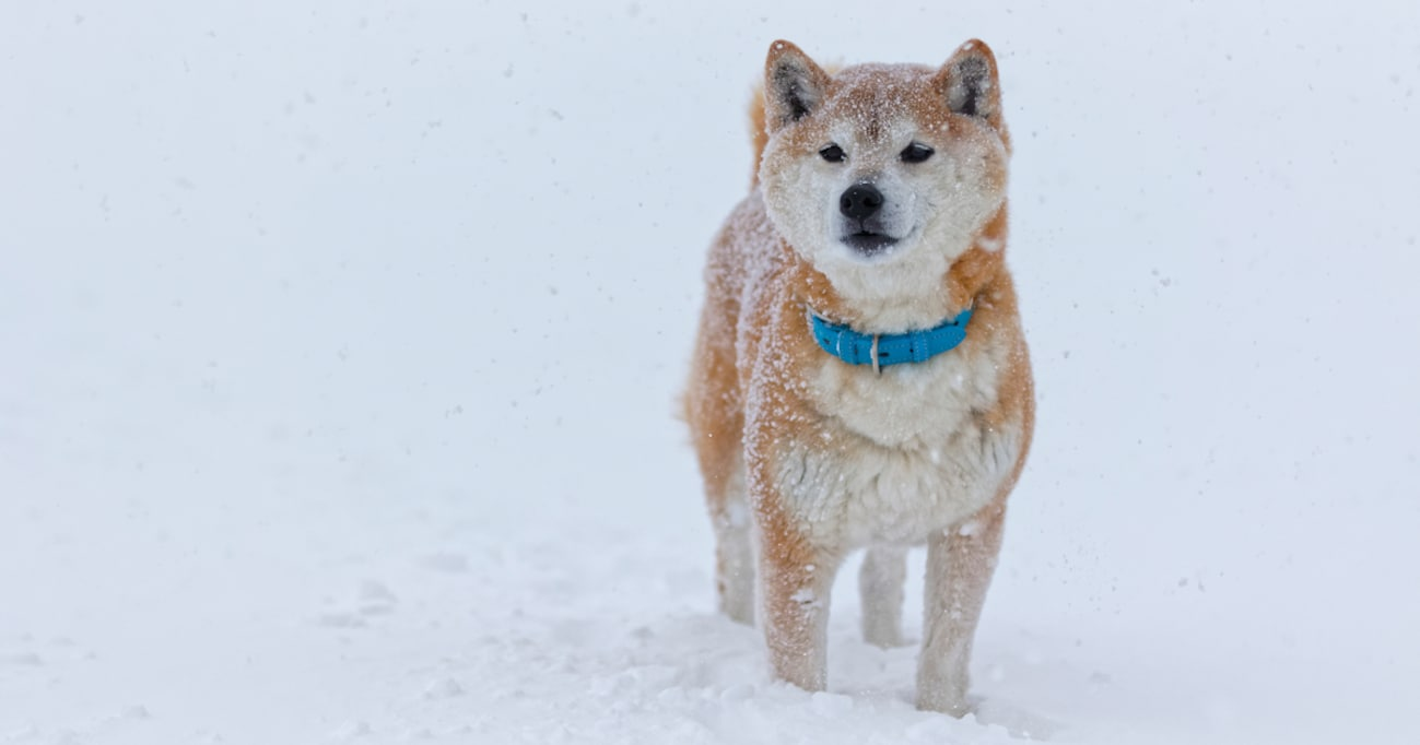 北海道・札幌では初雪を観測!動物たちにも冬が訪れてきた~