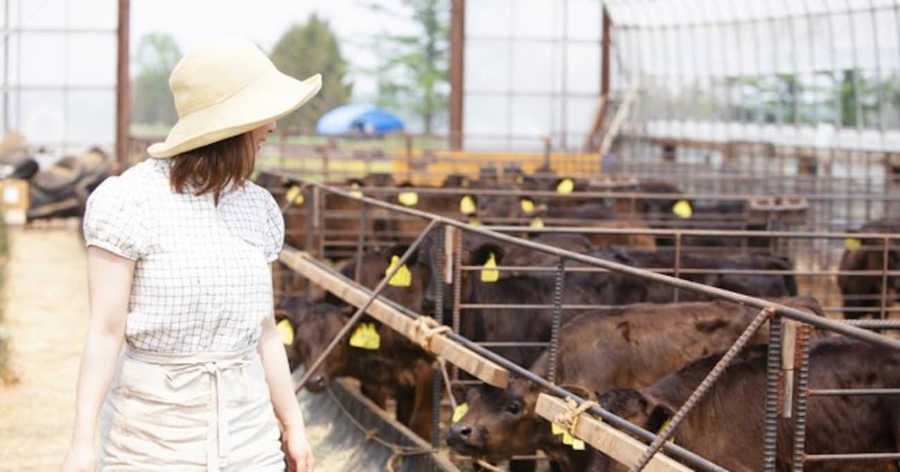 思春期女子か!子牛たちに新しい藁をプレゼントしたところ…おませな行動に思わず笑ってしまう