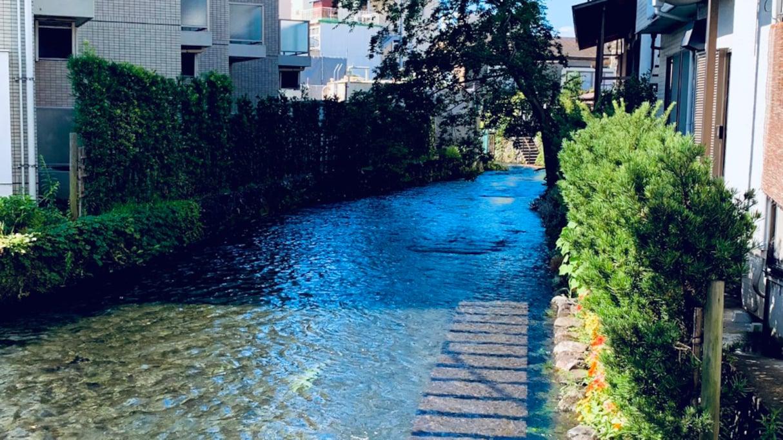 「美しすぎる…」水の都、三島で見た、源兵衛川の光景が幻想的すぎると話題に