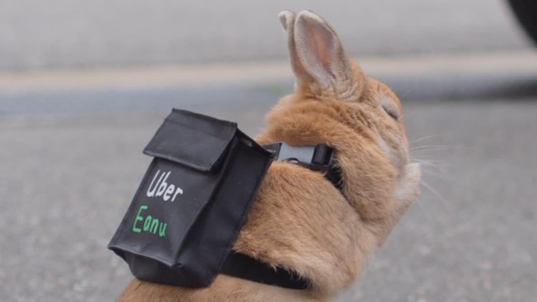 「宅配まだかなぁ?」Uber Eats風のリュックを背負ったうさぎが可愛すぎる!!!