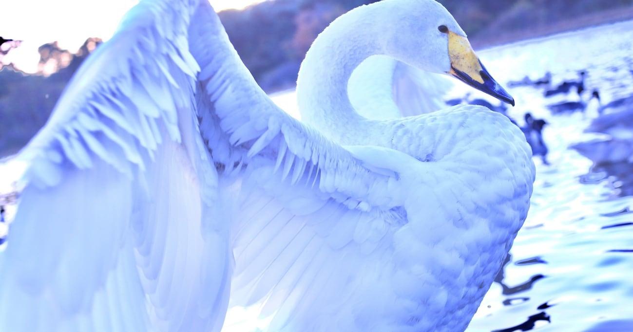 【北斗の拳】ケンシロウやラオウだけじゃない…水鳥が如く美しき拳法使いレイの名言