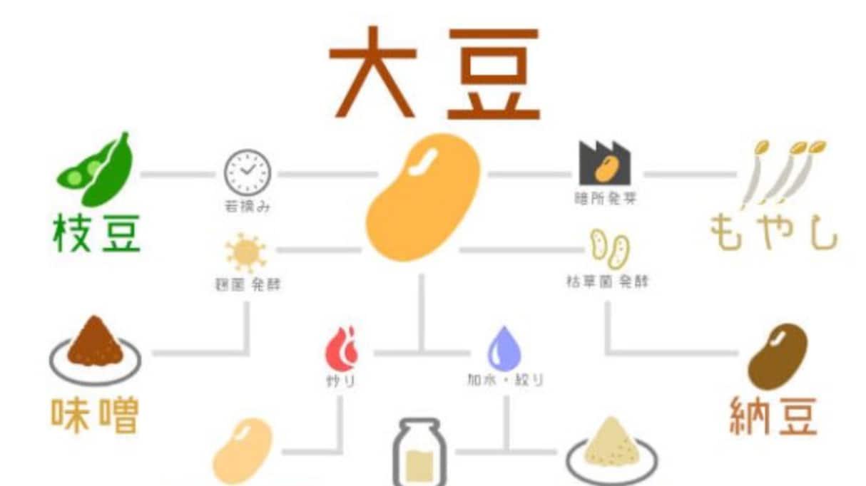 """「まさに""""豆""""知識」大豆製品を一覧にしてみたら、日本人の大豆への信頼度がハンパじゃないことが分かった"""