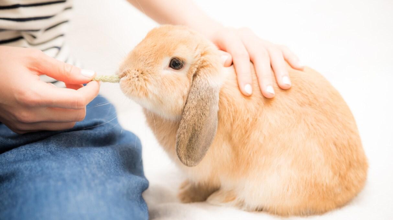 ウサギの餌が原因でアレルギーを発症をしたので、病院に行ってみたら医師からの助言に驚き