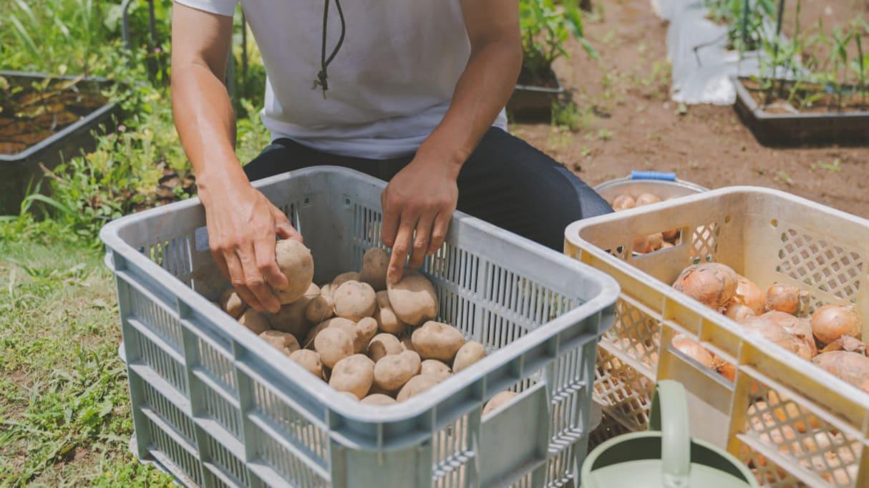 規格外品を「安く買い取る」は支援ではない!農家からの訴えが話題に