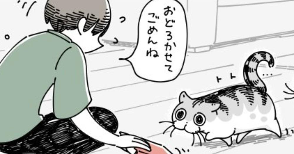 ネコの前に本を落としてしまい、驚いてしっぽが膨らむかな?と思っていると…予測不可能な生態が話題に