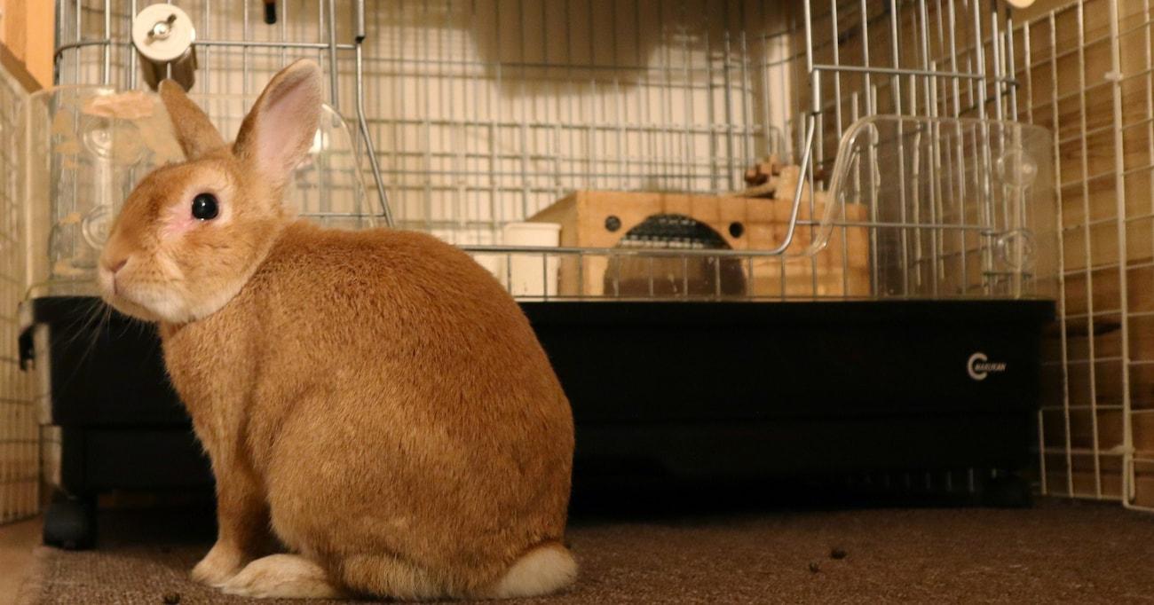【僕のヒーローアカデミア】見た目に影響が…あんな動物が…? 動物モチーフの個性
