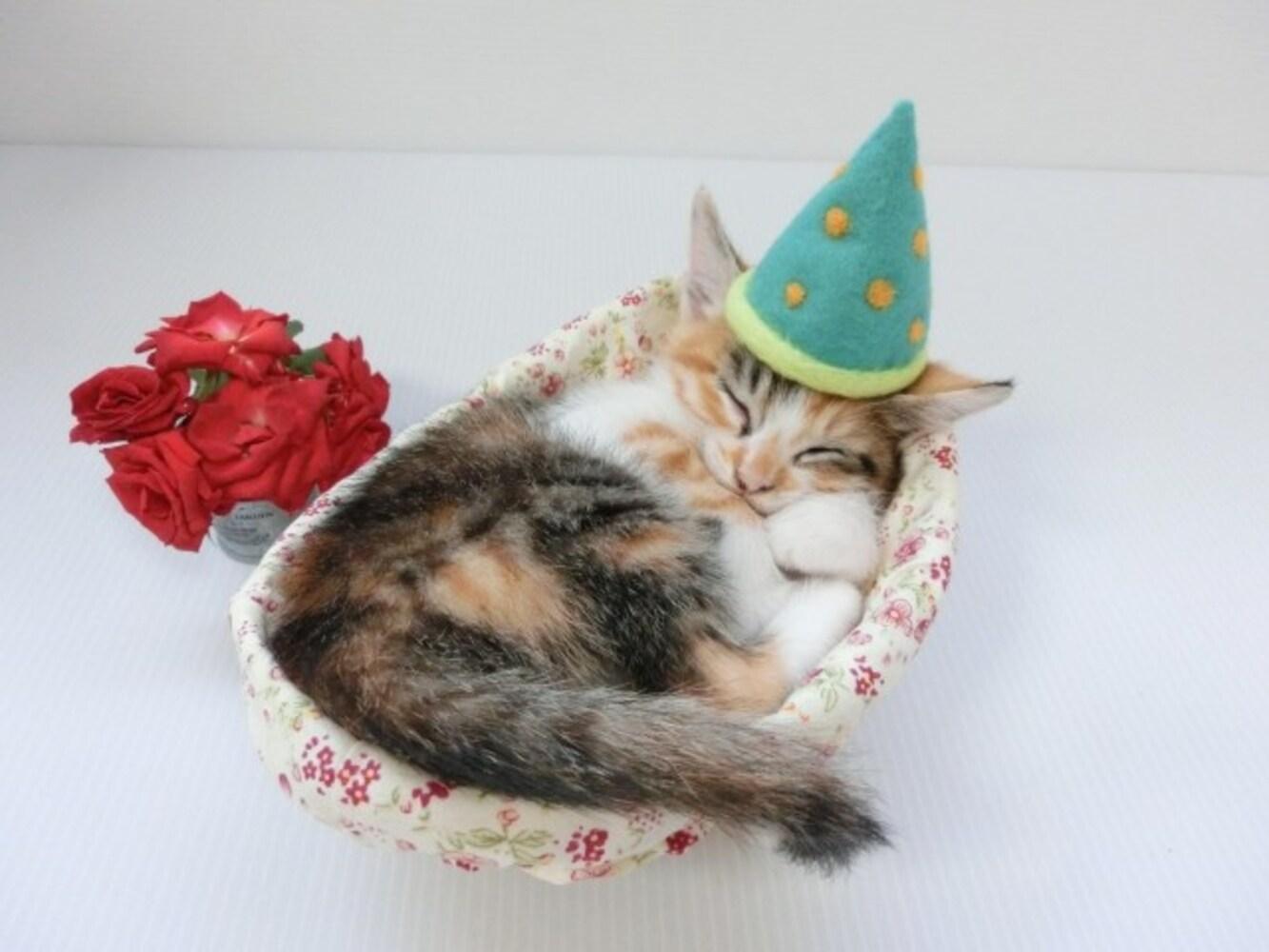 ベッドで眠る子猫